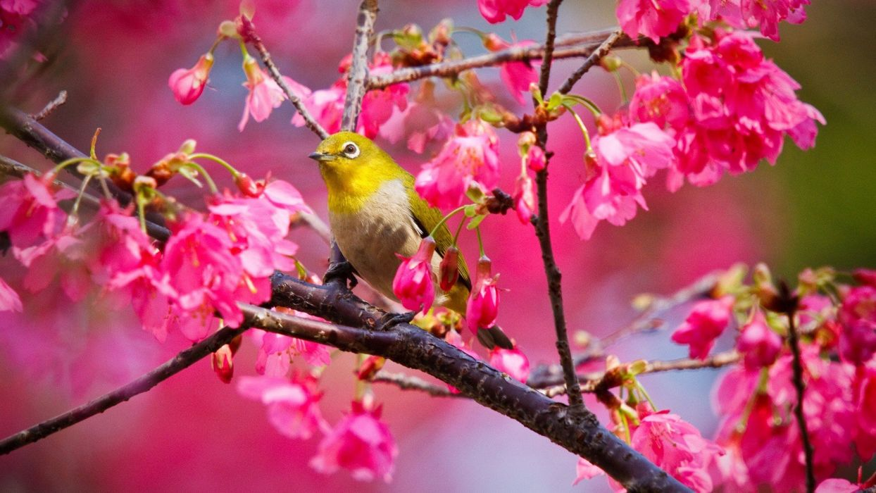 nature birds wallpaper