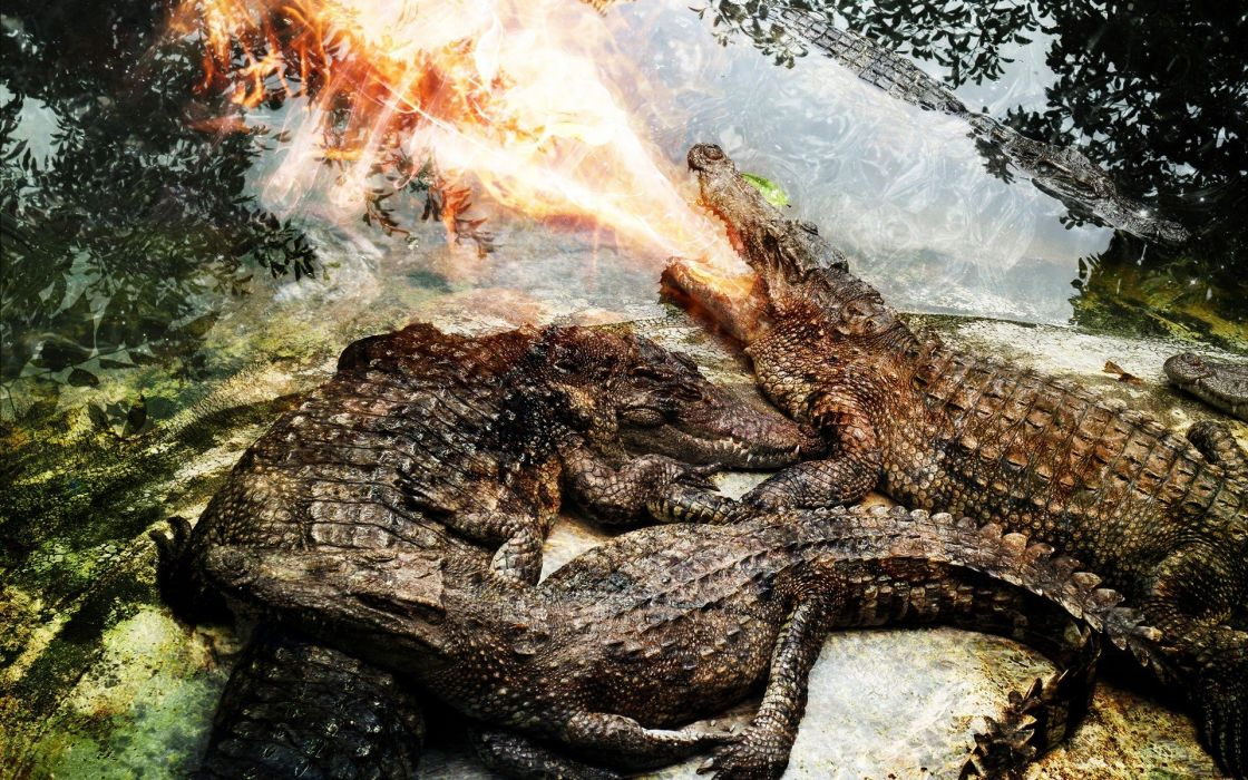 fire crocodiles reptiles photo manipulation wallpaper