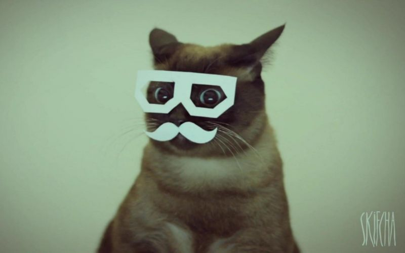 cats dubstep mustache Stereo Skifcha wallpaper