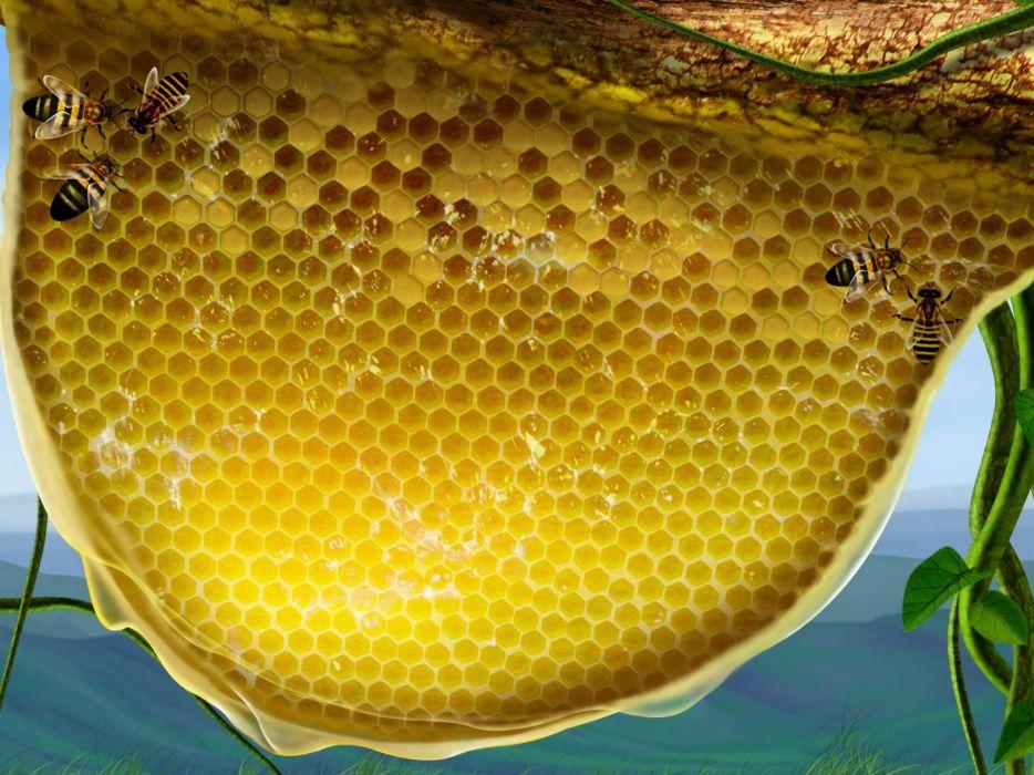 nature honey honeycomb wallpaper