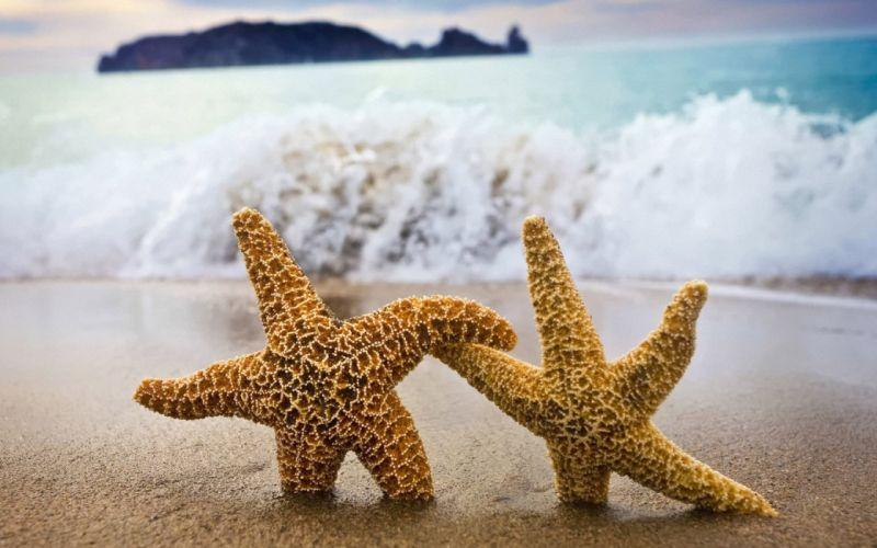 water starfish beaches wallpaper