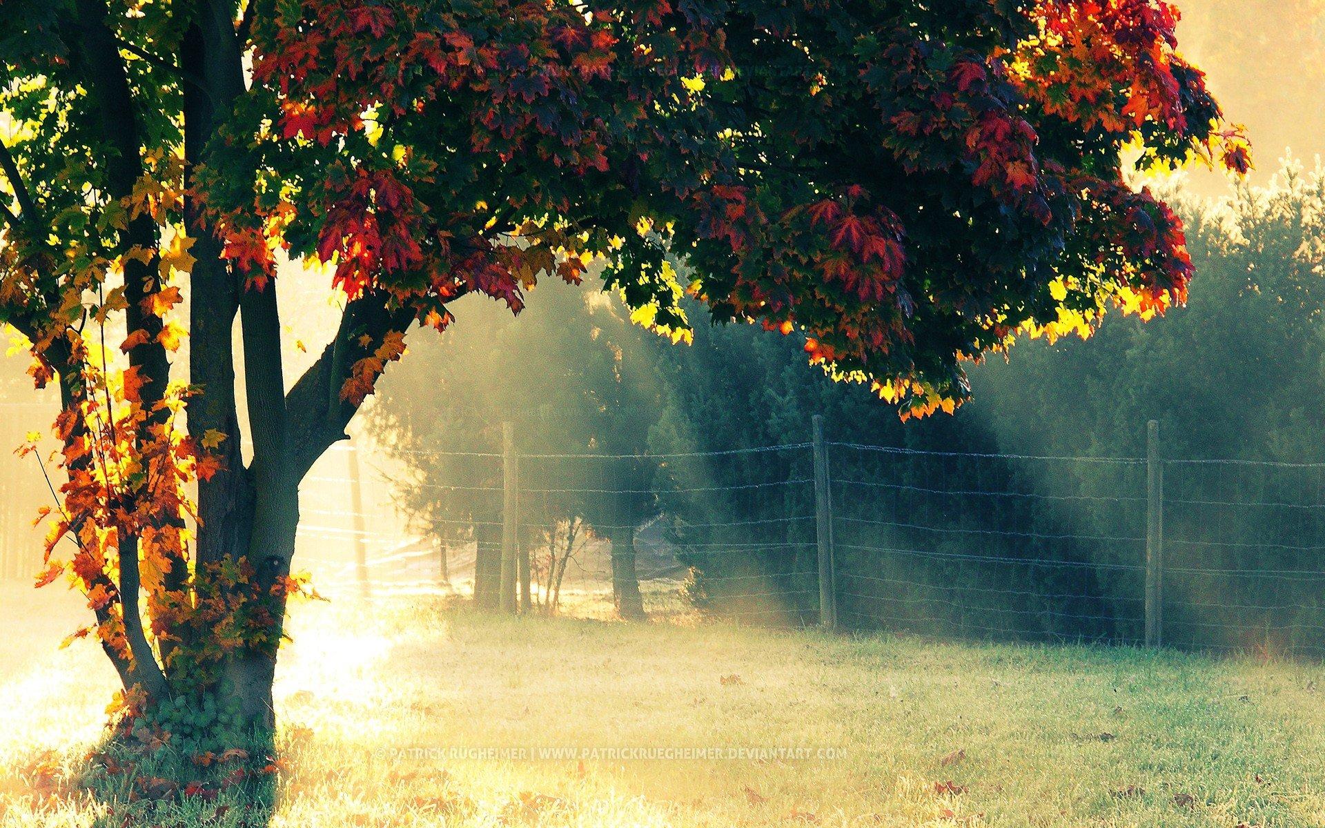 Nature Sun Trees Autumn Morning Wallpaper