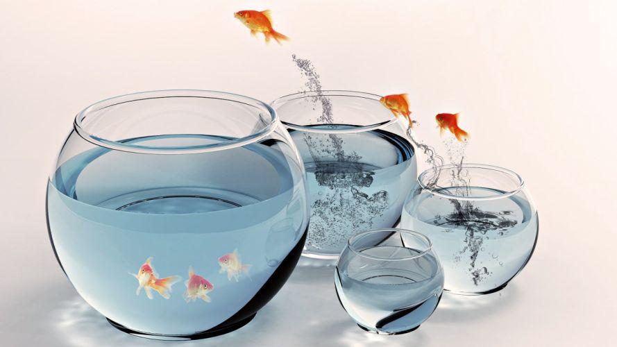 fish jumping fish bowls wallpaper