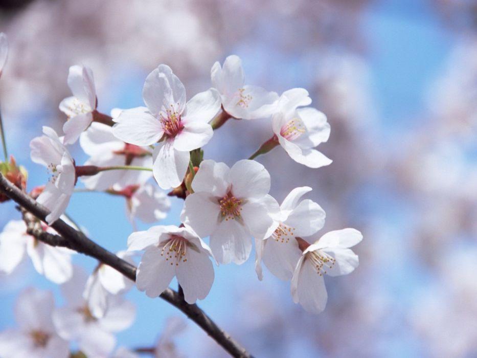 flowers spring wallpaper