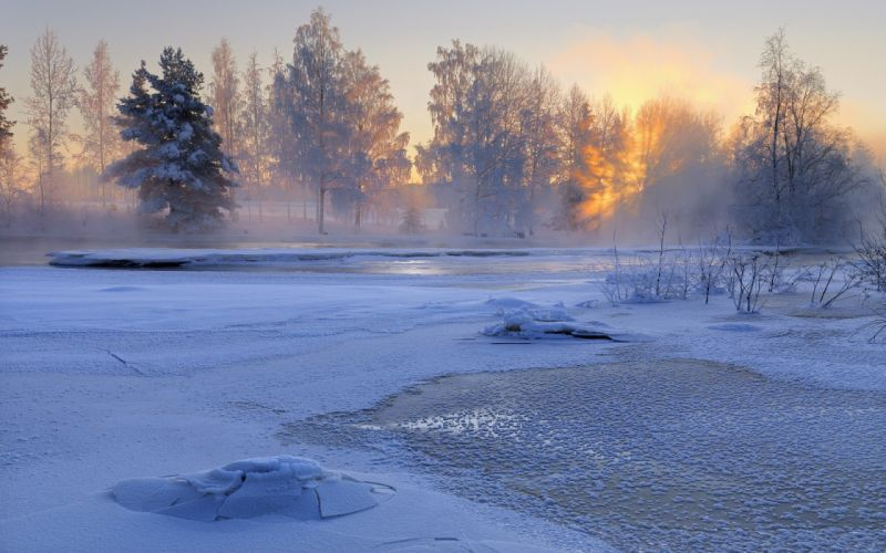 landscapes winter snow trees fog wallpaper