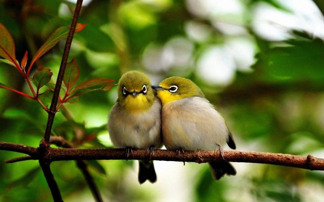 branch color leaves talking bird wallpaper
