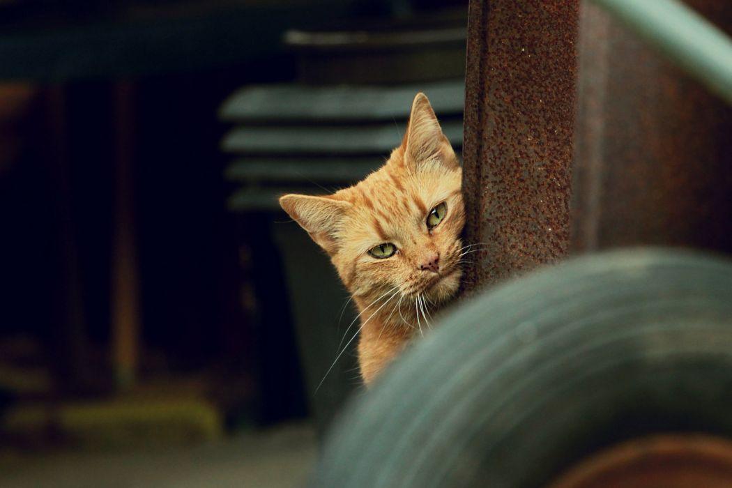 cat eyes red wallpaper