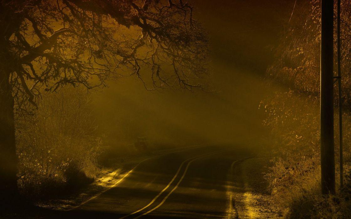 fog night trees road autumn wallpaper