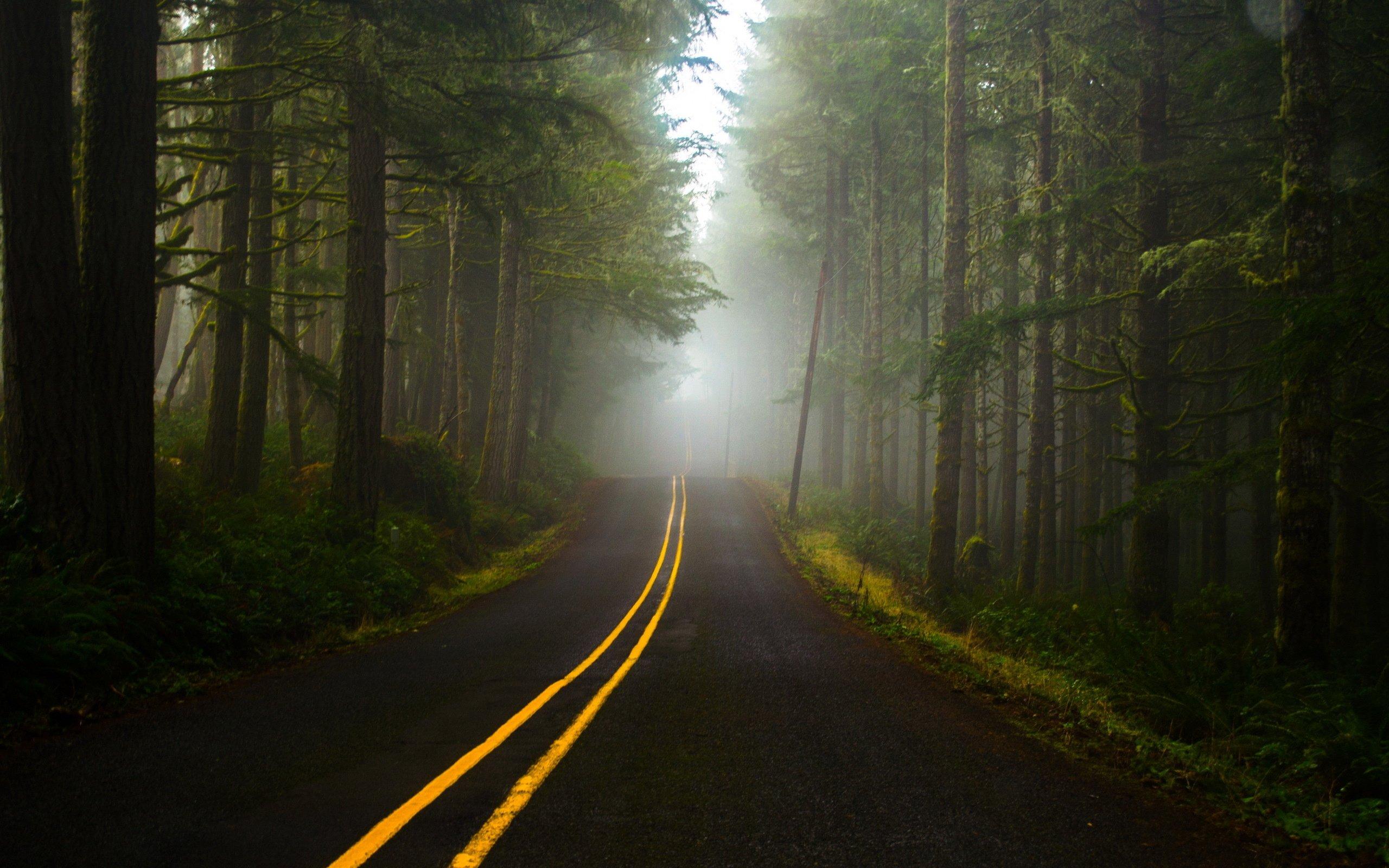 Fog Forest Road Wallpaper 2560x1600 348200 Wallpaperup