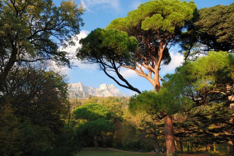Krajina Mishor Crimea mountains trees wallpaper
