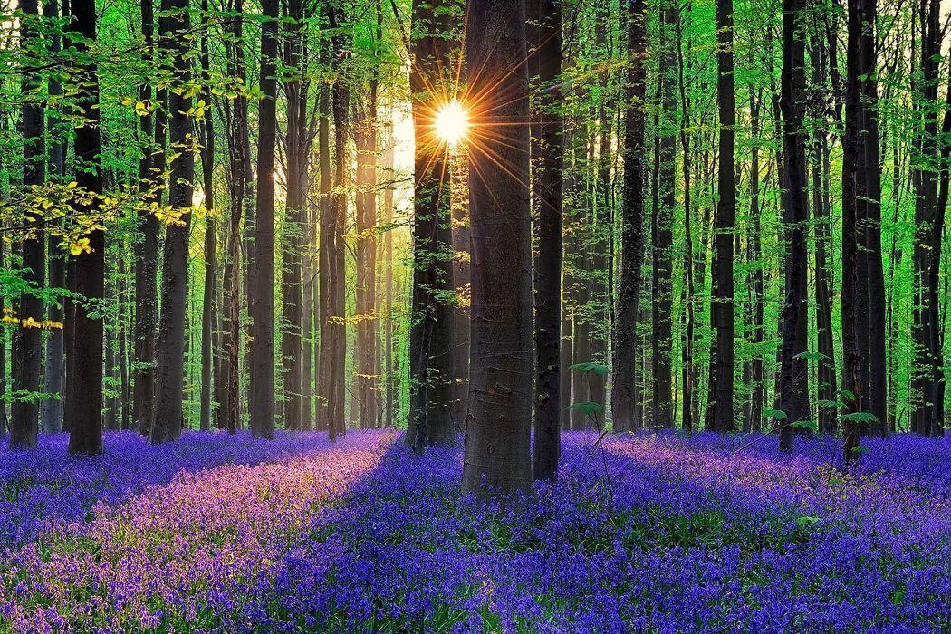 forest flowers bells sun Belgium wallpaper