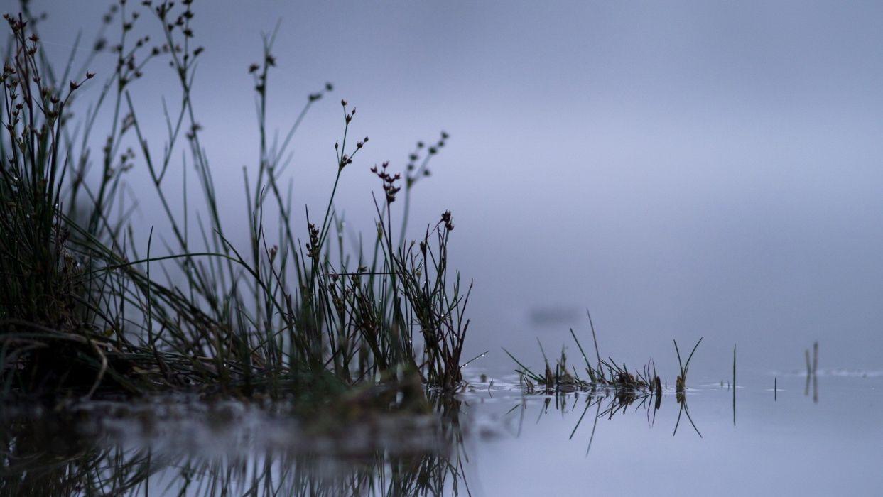 pond grass fog lake reflection wallpaper