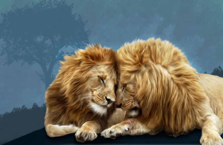 Big cats Lions Two Animals lion wallpaper