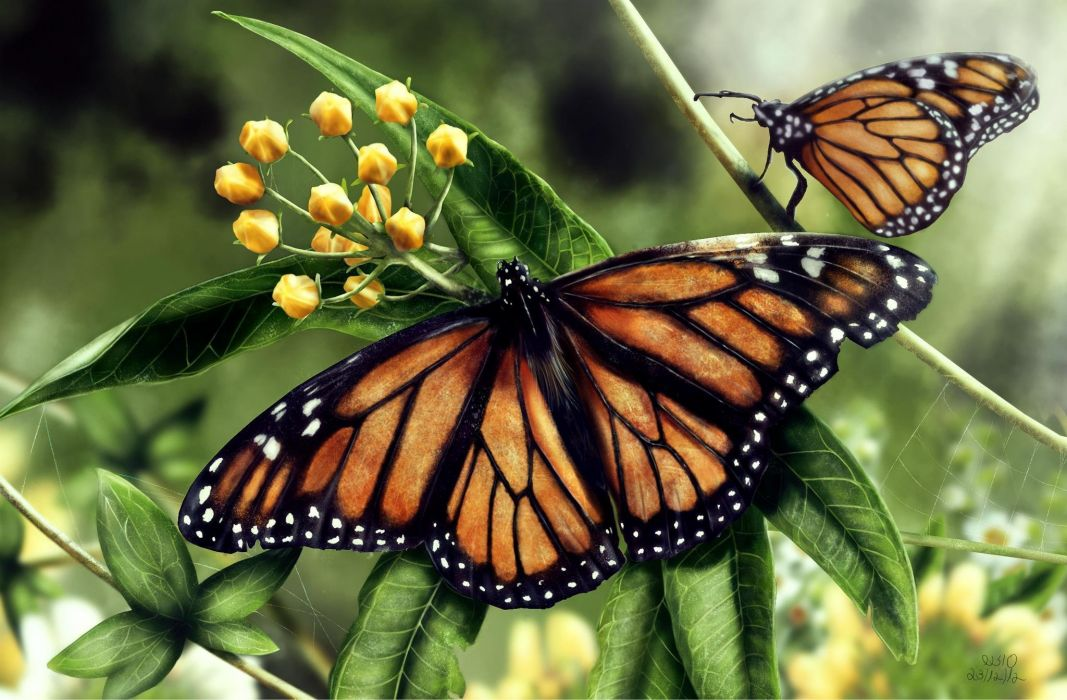 Butterflies Insects Two Animals butterfly wallpaper