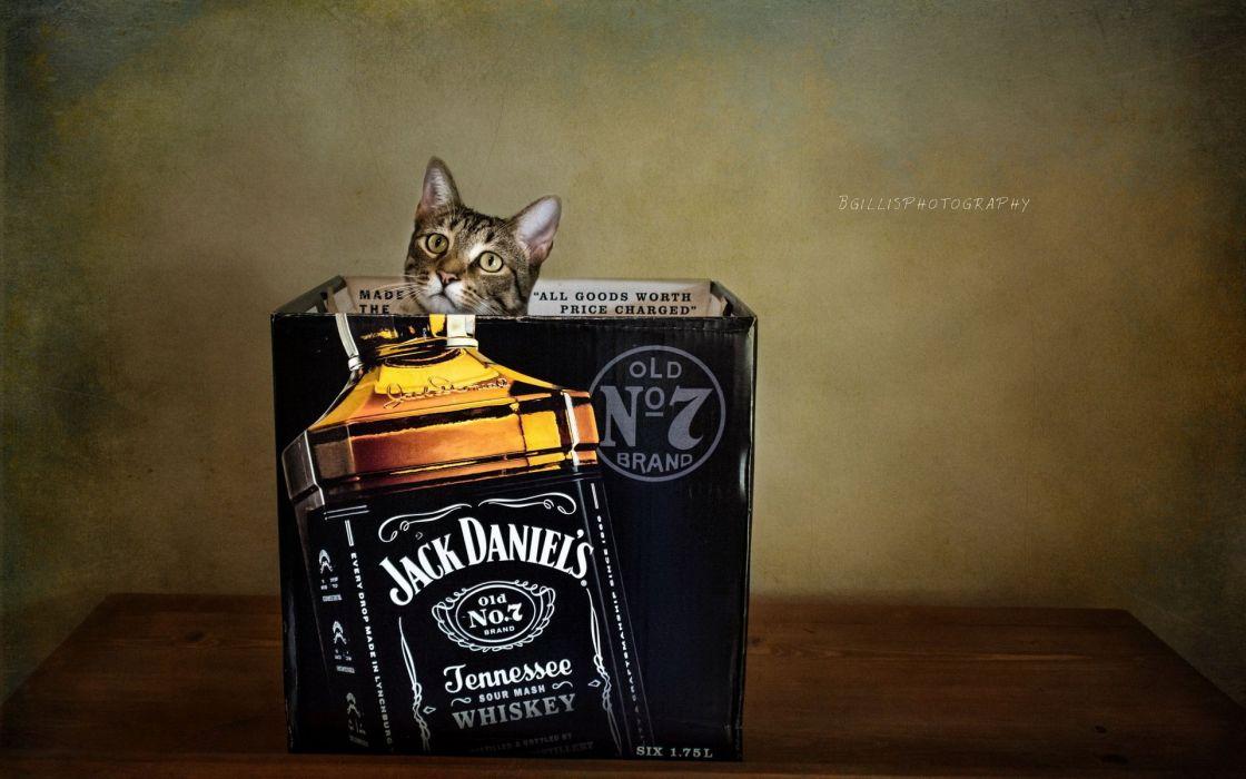 Cats Brands Jack Daniels Box Bottle Animals wallpaper