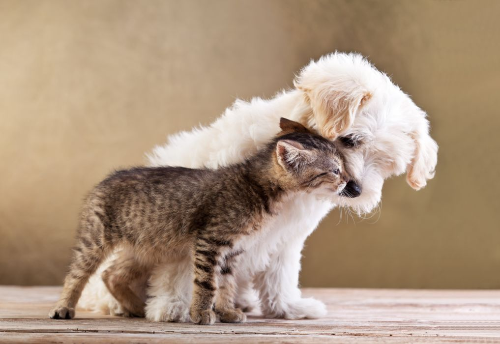 Cats Dogs Two Animals puppy kitten wallpaper