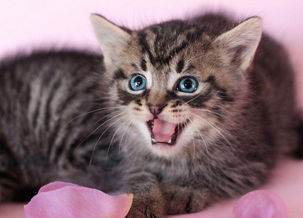 Cats Kittens Glance Animals kitten   d wallpaper
