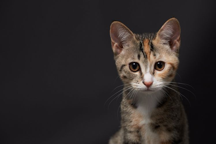 Cats Kittens Glance Animals kitten wallpaper