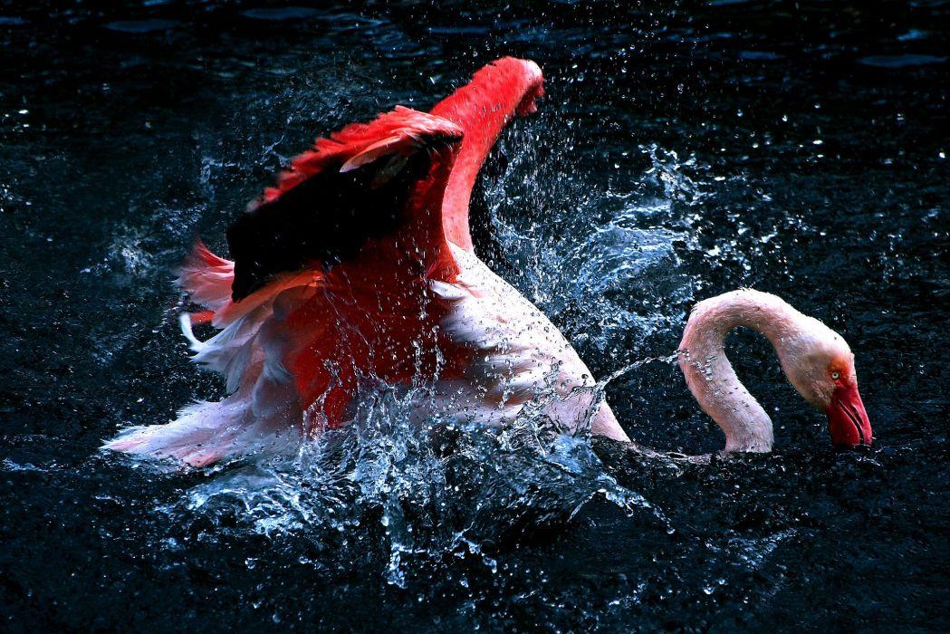 Flamingo Water Spray Animals wallpaper