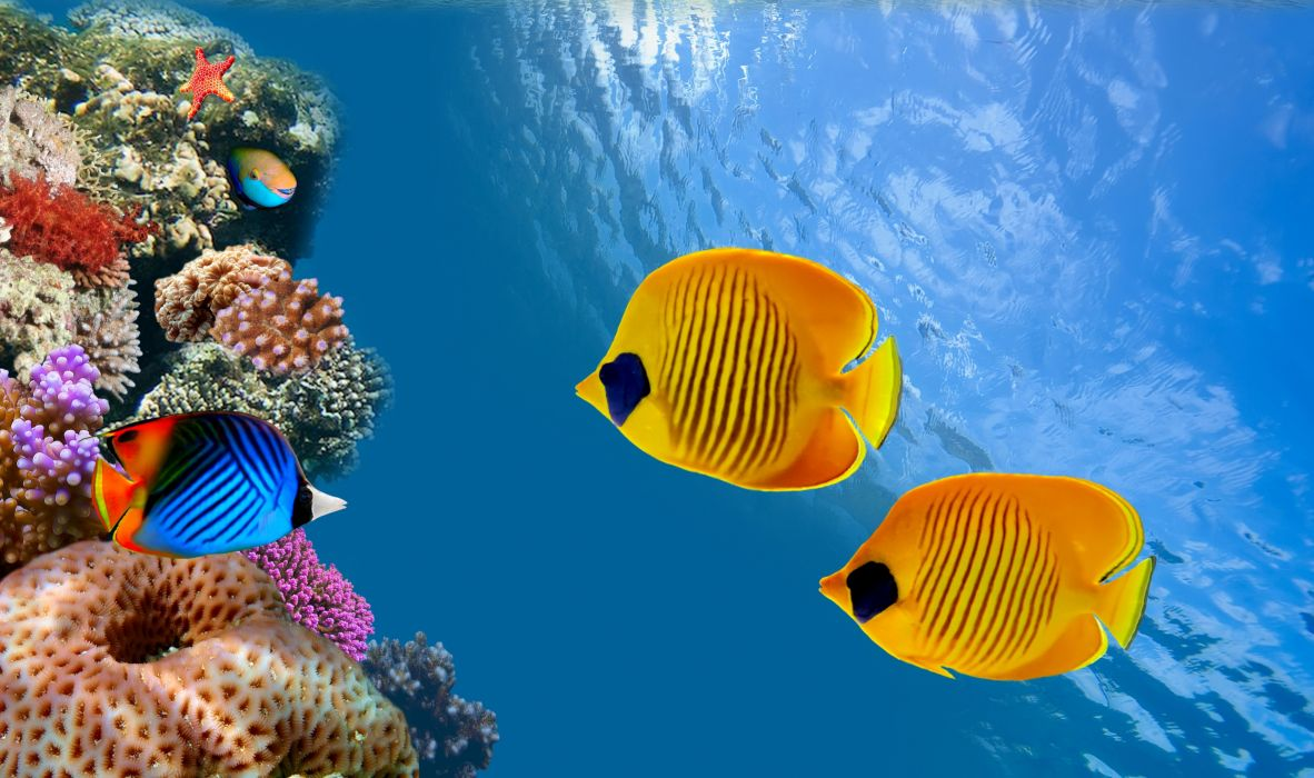 Fish Underwater world Animals wallpaper