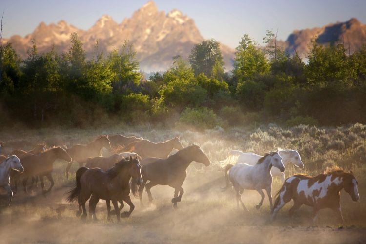 horses and herd nature horse wallpaper