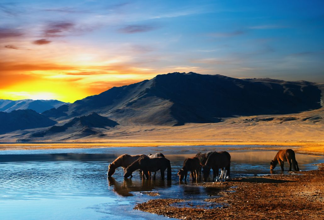 Horses Sunrises and sunsets Rivers Animals horse wallpaper