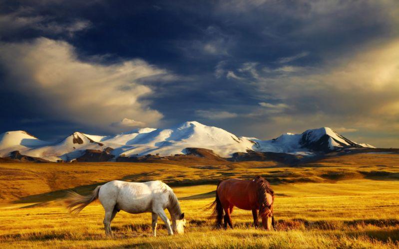 Horses Grasslands Mountains Grass Two Animals horse d wallpaper