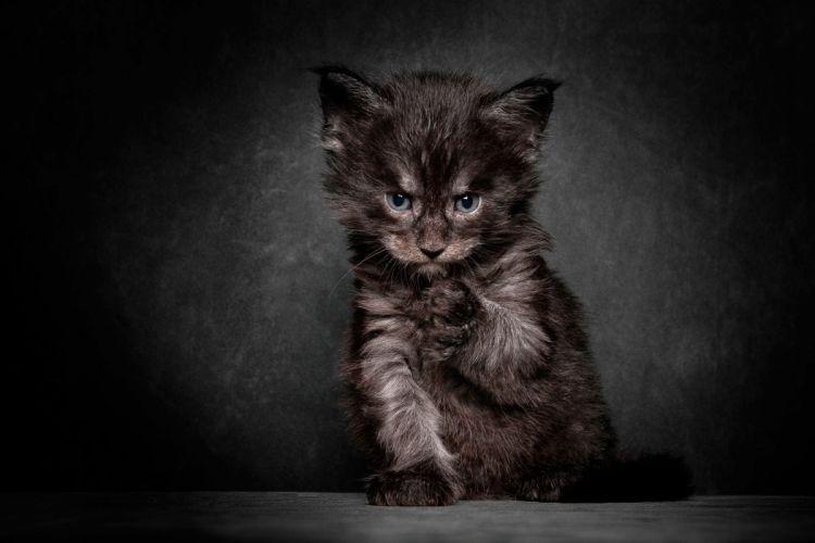 kitten cat cute wallpaper