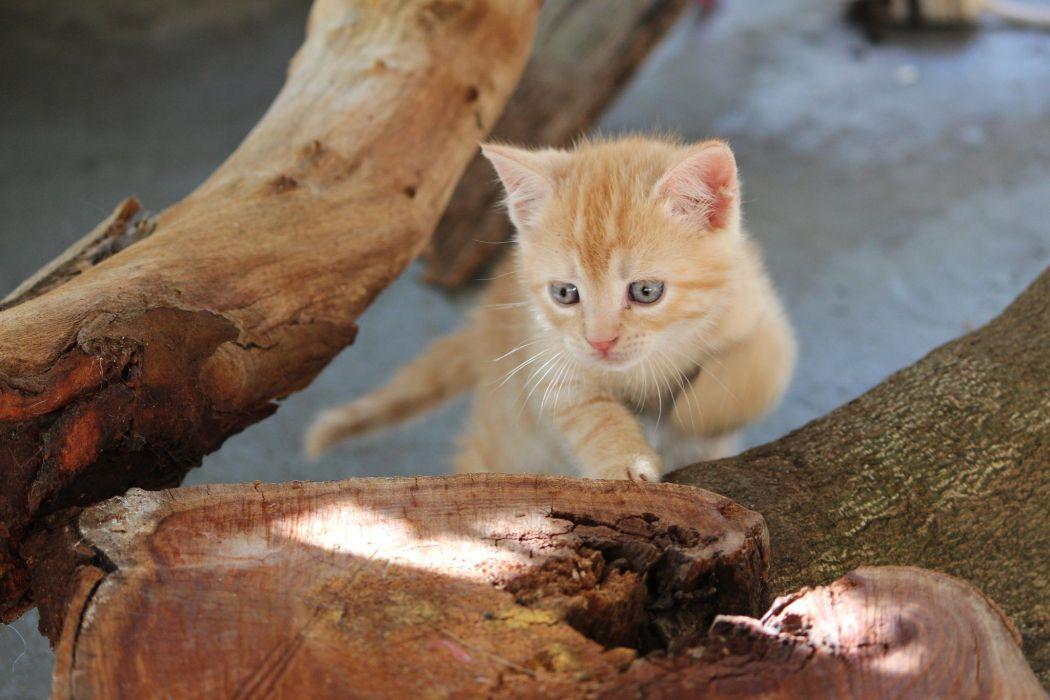 red tree cat stump wallpaper