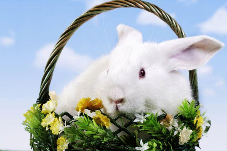 Rabbits Wicker basket Animals rabbit easter wallpaper
