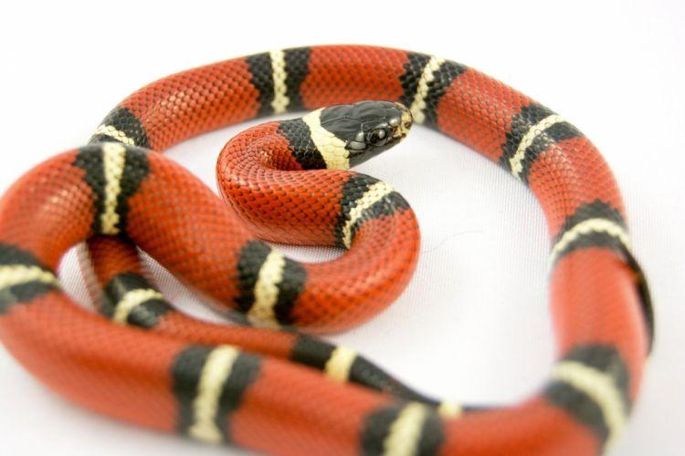 serpent snake bright macro wallpaper