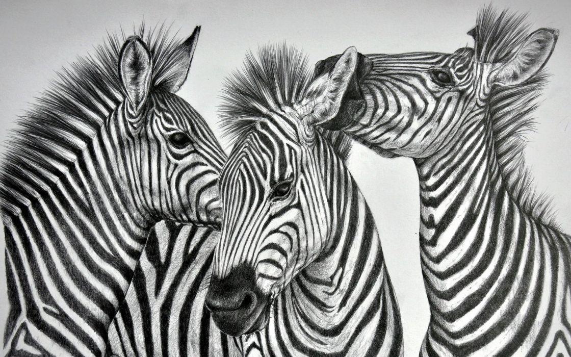 Zebras Three 3 Animals zebra wallpaper