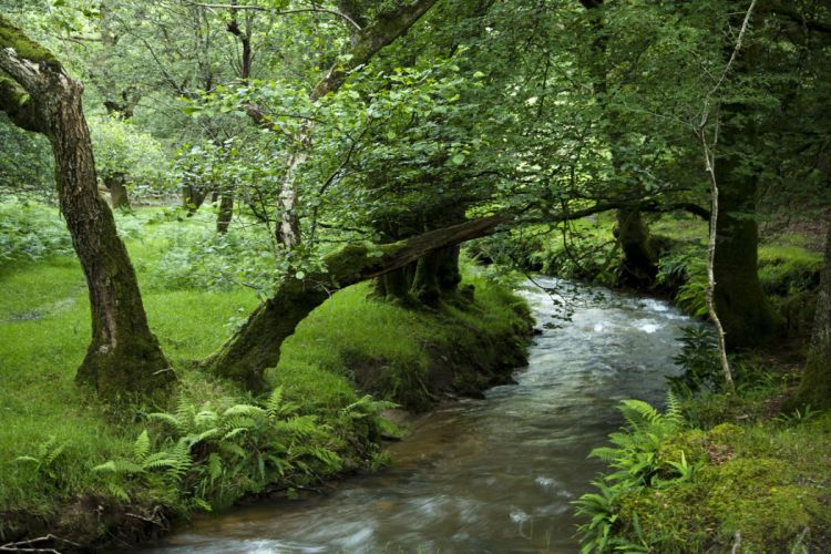 Forests Stream Trees Grass Nature wallpaper