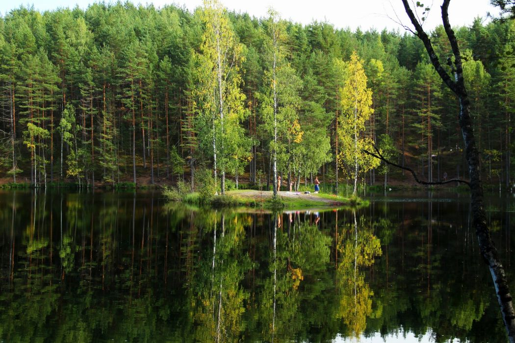 Lake Russia Forests Trees wallpaper