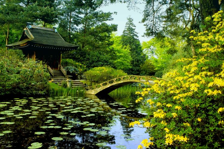 Parks Pond Bridges Shrubs Nature wallpaper