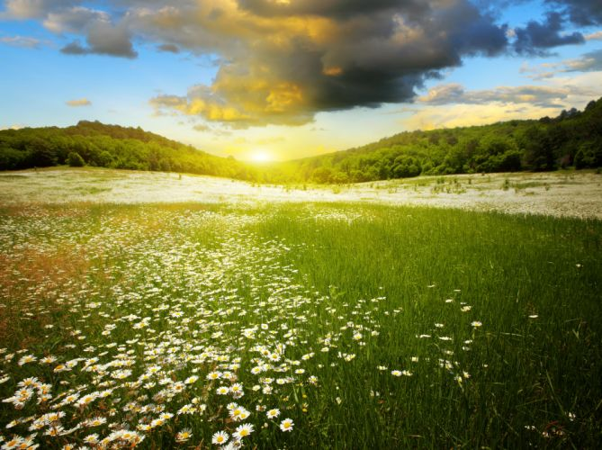 Scenery Sunrises and sunsets Camomiles Sky Forests Flight Clouds Grass Nature wallpaper