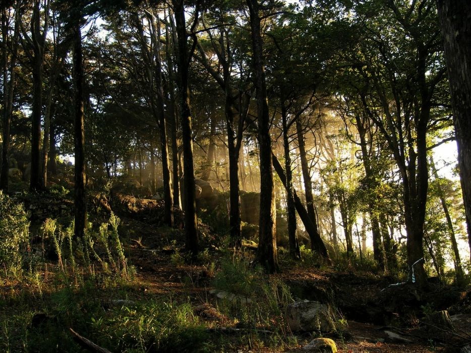 Spain Forests Trees Nature wallpaper