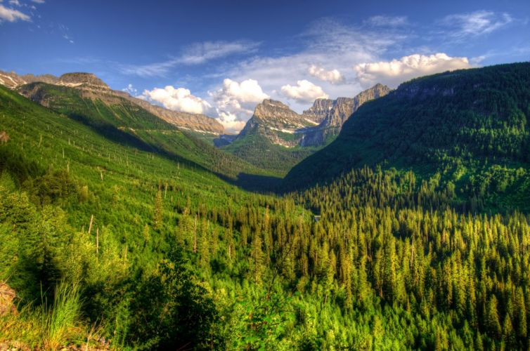 USA Glacier Montana Fir Nature wallpaper