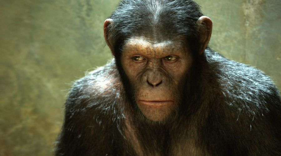 DAWN-OF-THE-APES action drama sci-Fi dawn planet apes monkey adventure (26) wallpaper