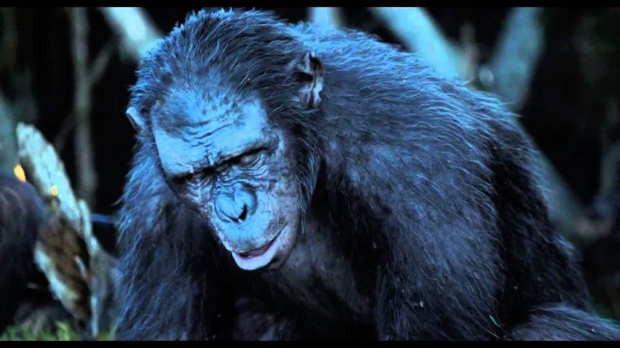 DAWN-OF-THE-APES action drama sci-Fi dawn planet apes monkey adventure (34) wallpaper