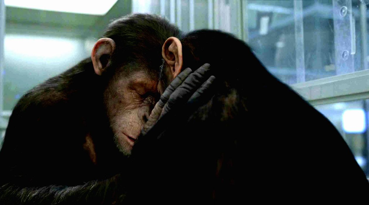 DAWN-OF-THE-APES action drama sci-Fi dawn planet apes monkey adventure (45) wallpaper