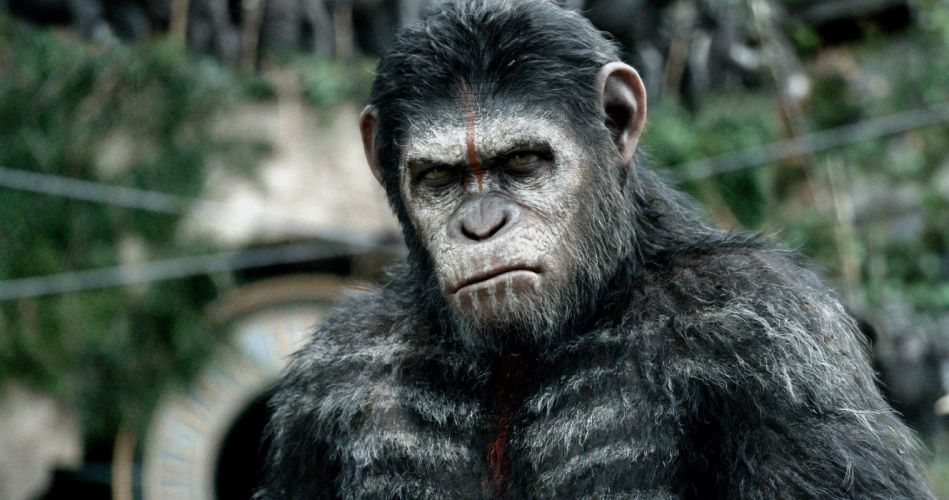 DAWN-OF-THE-APES action drama sci-Fi dawn planet apes monkey adventure (69) wallpaper