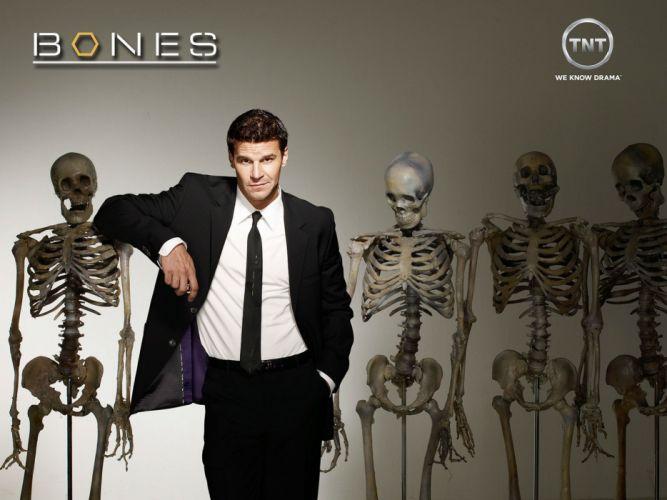 BONES comedy crime drama series (64) wallpaper