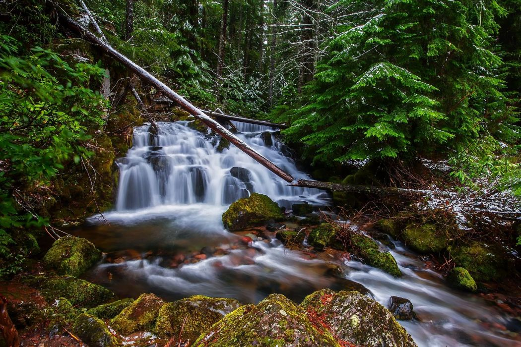forest trees river waterfall nature wallpaper