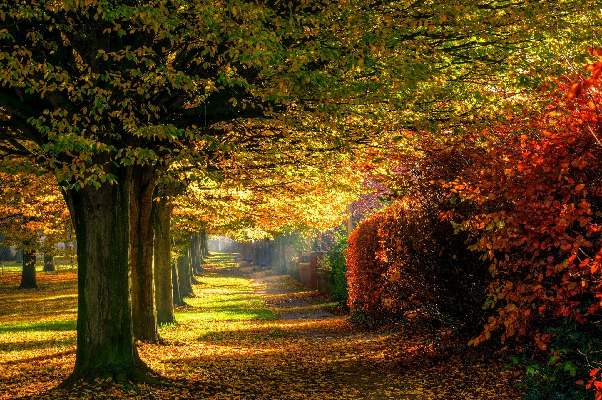 Leaves park trees forest colorful path nature autumn road ...