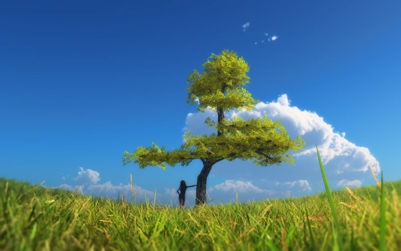 field tree sky landscape wallpaper