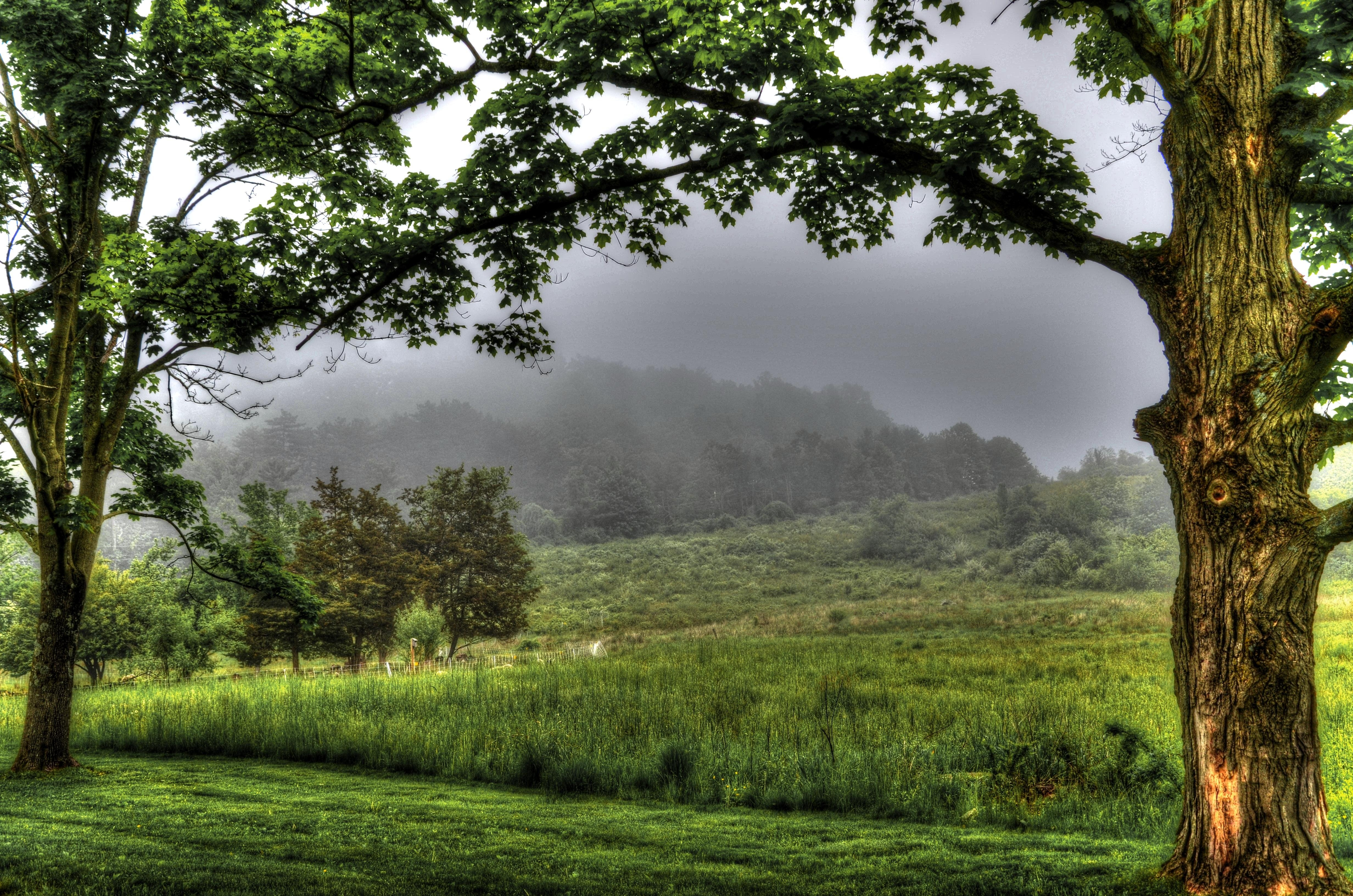 landscapes trees fog - photo #15