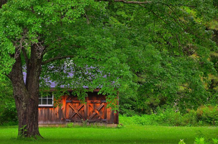meadow trees house landscape wallpaper