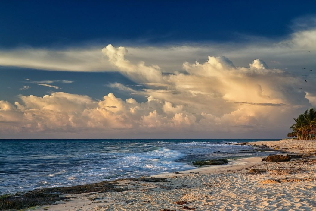 wind waves beach palm trees sea sand wallpaper