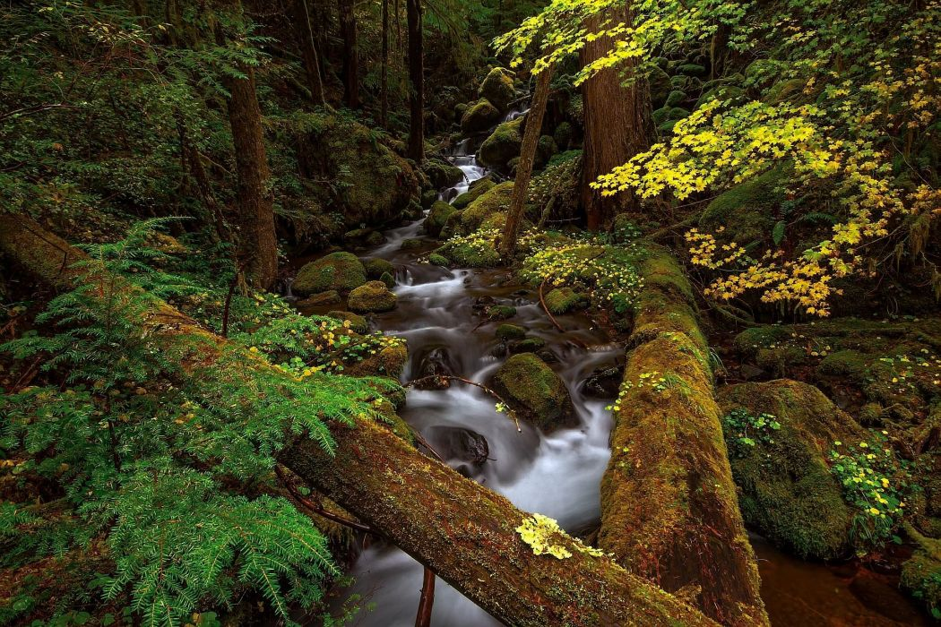 autumn forest river trees rocks nature wallpaper